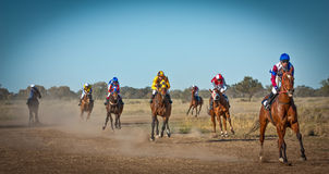 返回到在澳大利亚灌木的标度的赛马在偶然来临野餐NSW澳大利亚 免版税库存照片