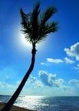 返回被点燃的棕榈树 库存图片