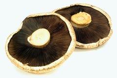 返回采蘑菇portabella侧视图 免版税图库摄影