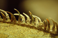 返回鬣鳞蜥端 免版税图库摄影
