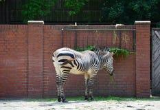 这一匹斑马在动物园里 库存图片