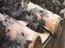 这中国农舍的房檐的景天科植物 免版税库存照片