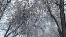 这些树比我的年龄24旧 图库摄影