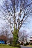 这些老伙计得到了一棵凉快的树 库存照片