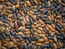 这些豆菜豆植物在伊朗北部,Gilan provinc 图库摄影