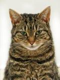 这只猫不在心情! 库存照片