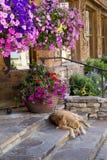 这只金毛猎犬采取休息在五颜六色的花盆下 库存照片