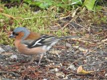 这只鸟是frindly鸟生活 库存图片