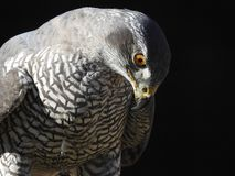 这只鸟的图片赢得了世界 免版税库存图片