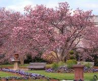Enid Haupt庭院华盛顿特区 库存图片