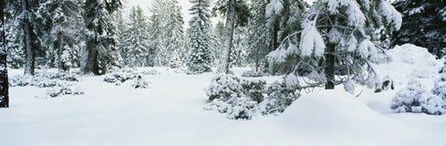 这在冬天雪风暴以后显示结构树 积雪结构树的分行和端 免版税图库摄影