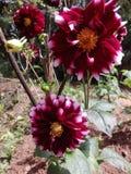 这开花的颜色包括几种颜色 免版税库存图片