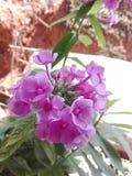 这开花的颜色包括几种颜色 免版税图库摄影