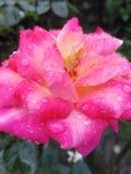 这是一朵美丽的花 库存图片