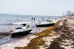 这是佛罗里达` s海滩这几年海草入侵看法  库存图片