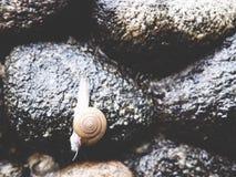 这是在石头的一只蜗牛 库存图片