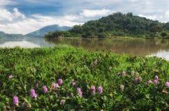 这是大象和瀑布,一个省Daklak-a国家在多山越南的中心 免版税图库摄影
