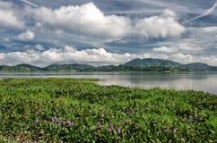 这是大象和瀑布,一个省Daklak-a国家在多山越南的中心 免版税库存图片