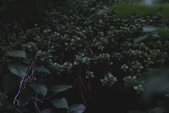 这是很多绿色植物在森林里 库存照片