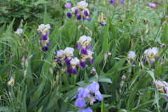 这是有很多五颜六色的颜色的一块巨大的沼地,有一片淡紫色树荫 免版税库存照片
