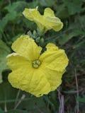 这是村庄flowerflo印度 免版税库存照片