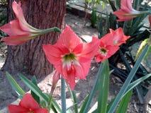 这是许多红色花蕾的图象有绿色叶子的 免版税图库摄影