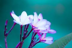 这朵花有一些种颜色 图库摄影