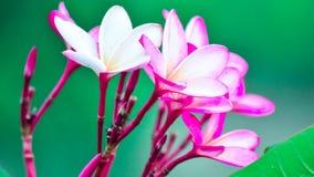 这朵花有一些种颜色 免版税库存照片