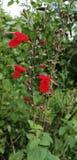 这棵图象自然wiled植物 免版税库存图片