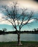 这棵树用尽了叶子 免版税库存照片
