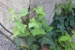 这棵植物设法接管 免版税库存照片
