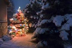这棵积雪的圣诞树明亮地引人注意反对晚上光深蓝口气在这个寒假sce的 免版税库存图片