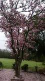 这棵美丽的树 免版税库存图片