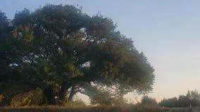 这棵老树 免版税库存图片