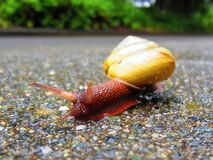 这里来蜗牛 库存图片