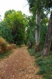进入叶茂盛森林的道路 免版税库存图片