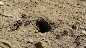 进入和留下蚂蚁小山的蚂蚁 股票视频