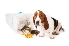 进入垃圾的坏狗 免版税库存图片