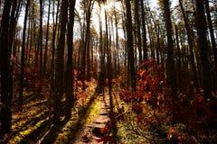 进入小山现出轮廓的杉树的森林道路 库存图片