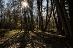进入山口的柏油路风景通过树、村庄和森林地方 或者Aze农村地方  免版税库存照片