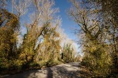 进入山口的柏油路风景通过树、村庄和森林地方 或者Aze农村地方  免版税库存图片