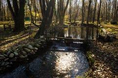 进入山口的柏油路风景通过树、村庄和森林地方 或者Aze农村地方  免版税图库摄影