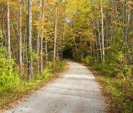 进入森林的偏僻的走的足迹 与秋天的美丽的树上色线道路 免版税库存照片