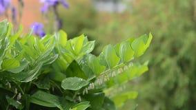 进出焦点庭院灌木叶子 影视素材