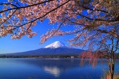 进展樱桃日本kaikomagatake mt 从湖` Kawaguchiko `日本的富士 库存图片