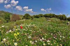 进展的明亮的域花草甸春天 免版税图库摄影