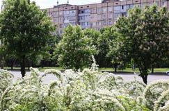进展的春天在城市 免版税库存照片