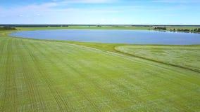 进展的荞麦领域包围的蓝色湖 股票录像