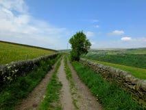 进来上升在有毗邻牧场和一棵唯一树的石块墙的春天乡下的长的平直的国家车道 免版税库存照片