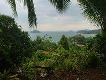 远的看法在紧的森林里 免版税库存照片